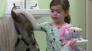 Miniature Horse Brings Smiles to Children in Michigan Hospital [Video]