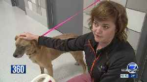 Pet detectives help find missing furry friends in Colorado [Video]
