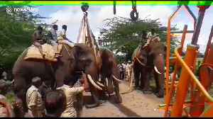 Forest officials capture renegade elephant that terrorised Indian villagers [Video]