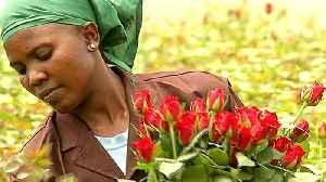Brexit effect: UK looks beyond EU to Kenya flower farms [Video]