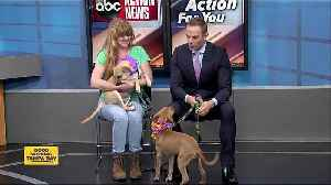Pets of the week: 3-month-old Mulder and Scully want to investigate your home [Video]