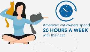 Cat Lovers Spend More Than 1,000 Hours a Year With Their Feline Friends [Video]