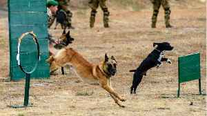 Five Ways The Military Uses Dogs For Dangerous Missions [Video]