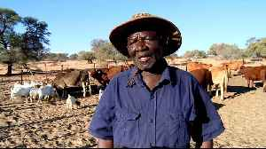South Africa's worst drought in years affects farmers [Video]