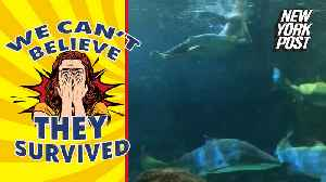 Watch a drunken swim with sharks and other unlikely tales of survival [Video]