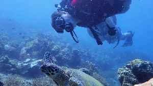 November Sea Hero Helps Protect Sea Turtles [Video]