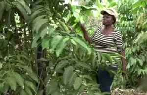 Ugandan coffee farmers wary of bitter taste over proposed bill [Video]
