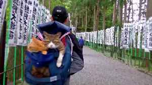 These adorable pictures show the real Hello Kittys! - rescue kittens that travel Japan in their owner's arms, bike basket and le [Video]