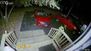Raccoon Raids Open Car [Video]