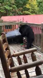 Black Bear on the Back Deck [Video]