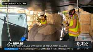 News video: New York Public Library's Statues Back On Display After Cleaning