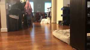 Ghost Dog Disapproves of Costume [Video]