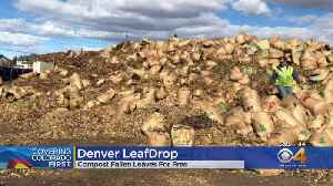 Denver Offers Leaf Drops To Help Prevent Clogged Gutters [Video]