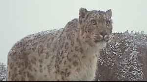 Kyrgyzstan wildlife bounces back after hunting moratorium [Video]