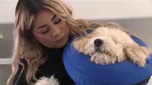 Puppy Leaves Utah Veterinarian with Iv Still In, Injuries from Clippers [Video]