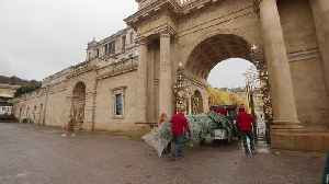 Christmas trees arrive at Chatsworth House [Video]