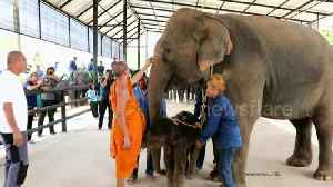 Baby elephant born at zoo in Thailand and blessed by Buddhist monks [Video]
