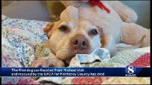 Adopted dog in Monterey confiscated from Michael Vick has died [Video]