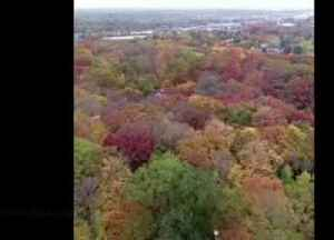 Aerial footage shows off remarkable colours of autumn foliage [Video]