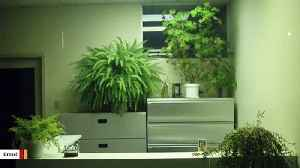 Science Says Potted Plants Don't Do Much For Indoor Air Quality [Video]