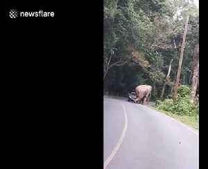 Terrifying moment wild elephant CRUSHES passing car on mountain road in Thailand [Video]