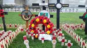 WWII Veterans lay tributes to fallen comrades at the Field of Remembrance in Westminster Abbey [Video]