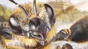 Meet B, The First Bee Influencer [Video]