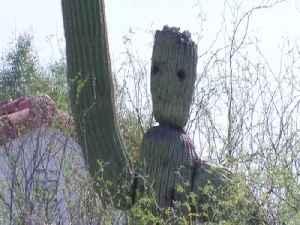 GROOT! Tucson cactus looks like Guardians of the Galaxy superhero - ABC15 Digital [Video]
