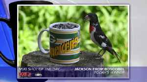 Mug shot of the day - 11/8/19 - Jackson [Video]