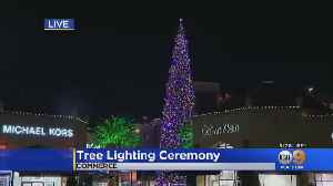 The World's Tallest Live-Cut Christmas Tree Lights Up At Citadel Outlets [Video]