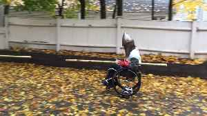 Guy in Knight Costume Rides Wheelchair Over Hoverboard and Jousts With Pumpkin Dressed as Opponent [Video]