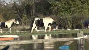 Ponies rescued from flood waters in South Yorkshire village [Video]