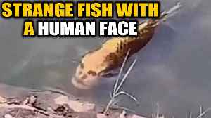 Fish with a human face found in china, video goes viral | Oneindia News [Video]