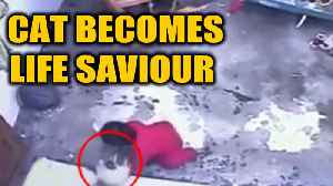 Cat saves toddler's life, video goes viral | OneIndia News [Video]