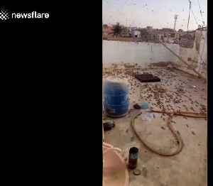 Swarm of black locusts descends on farmland near city of Karachi [Video]