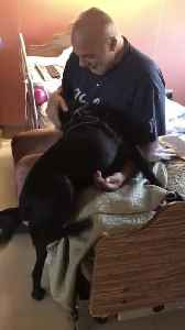 Man Gets Surprise Visit From Dog at Nursing Home [Video]