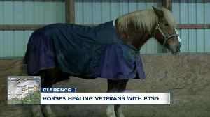 Horses healing veterans with PTSD [Video]