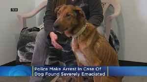 Police Make Arrest In The Case Of Gabriel, The Wisconsin Dog Found Severely Emaciated [Video]