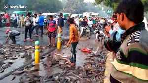 Live fish strewn across Indian road after transport truck topples over [Video]