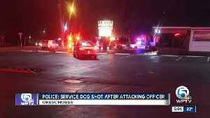 Police: service dog shot after attacking officer [Video]