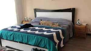 Dog Basks in Bed When Moms Gone [Video]