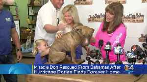 'Miracle' The Dog Adopted [Video]