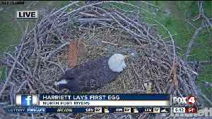 Harriet the bald eagle lays her first egg of 2019 [Video]