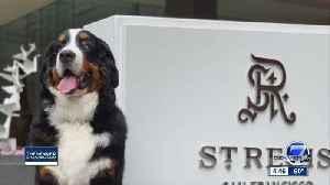 Aspen hotel needs fur butler [Video]