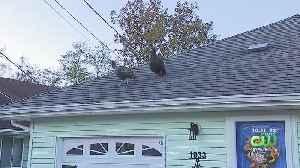NJ Outlines Plan To Trap Wild Turkeys Terrorizing Toms River Community [Video]