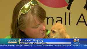 Trending: Unicorn Puppy [Video]