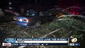 Driver hits tree that fell on road in Bonita [Video]