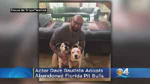 'Guardians Of The Galaxy' Actor Dave Bautista Adopts Abandoned Florida Pit Bulls [Video]