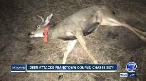 Deer wearing orange dog collar attacks and gores man in Franktown [Video]