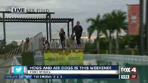 Preview: 'Hogs and Air Dogs' benefits Gulf Coast Humane Society [Video]